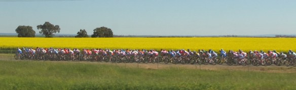 UCI Worlds bunch en route to Geelong 2010